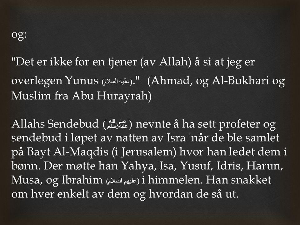 og: Det er ikke for en tjener (av Allah) å si at jeg er overlegen Yunus (عليه السلام). (Ahmad, og Al-Bukhari og Muslim fra Abu Hurayrah)