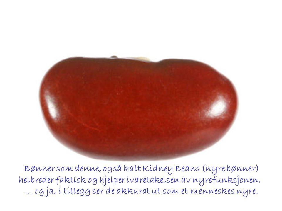 Bønner som denne, også kalt Kidney Beans (nyre bønner)