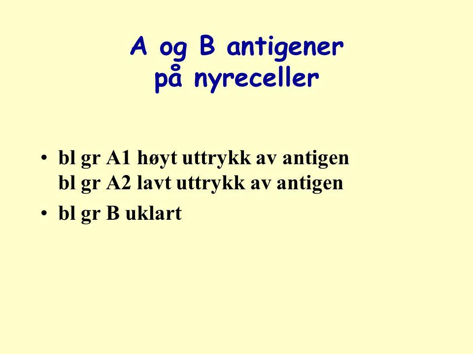 A og B antigener på nyreceller