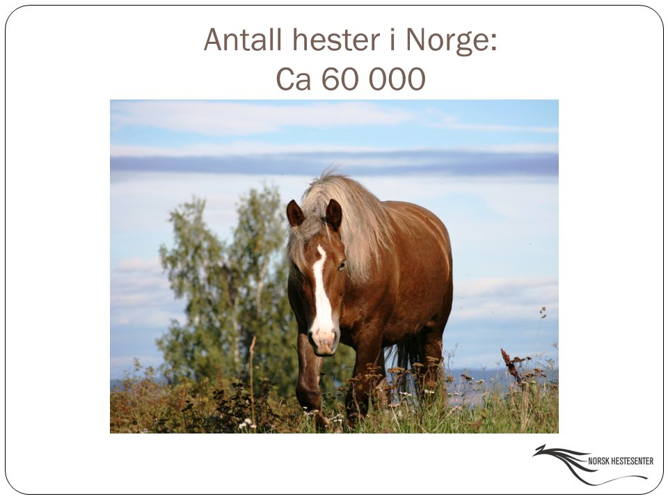 Antall hester i Norge: Ca 60 000