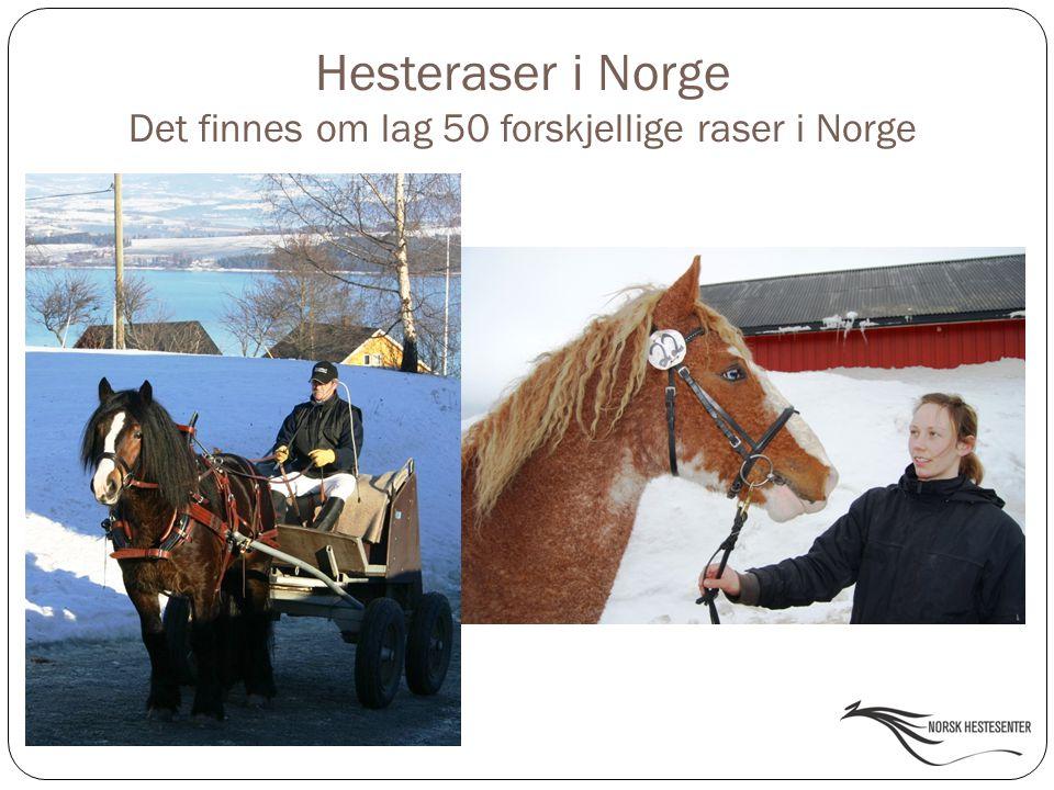Det finnes om lag 50 forskjellige raser i Norge