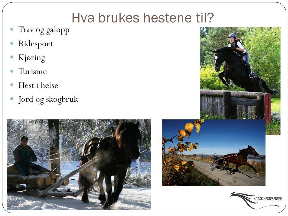 Hva brukes hestene til Trav og galopp Ridesport Kjøring Turisme
