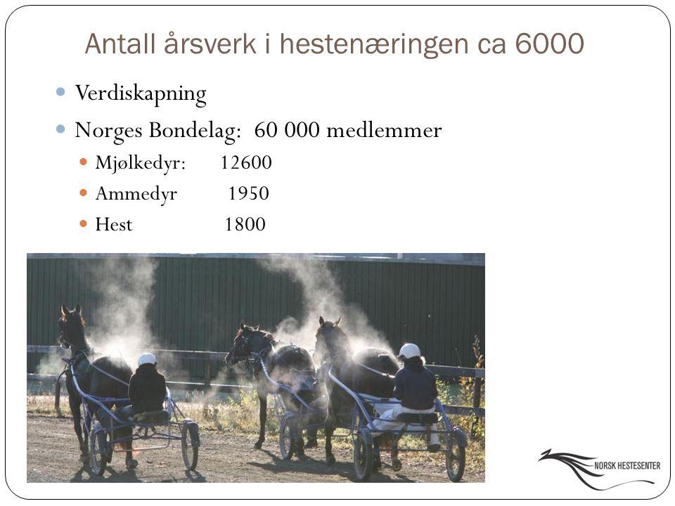 Antall årsverk i hestenæringen ca 6000