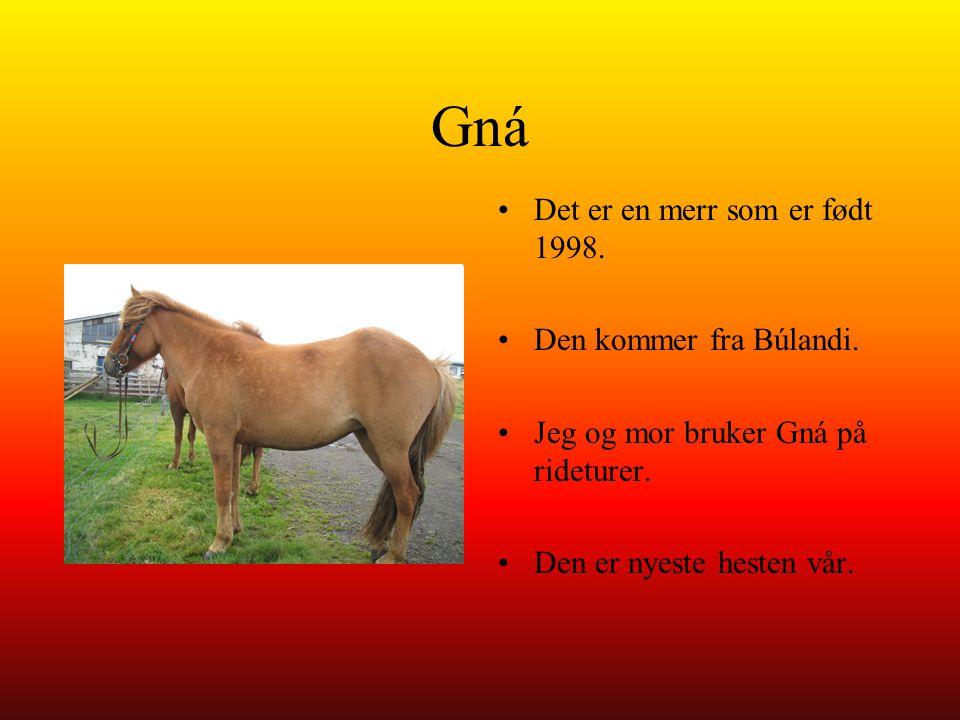Gná Det er en merr som er født 1998. Den kommer fra Búlandi.
