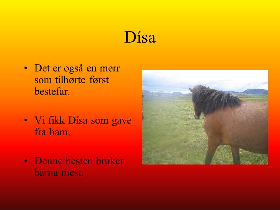 Dísa Det er også en merr som tilhørte først bestefar.