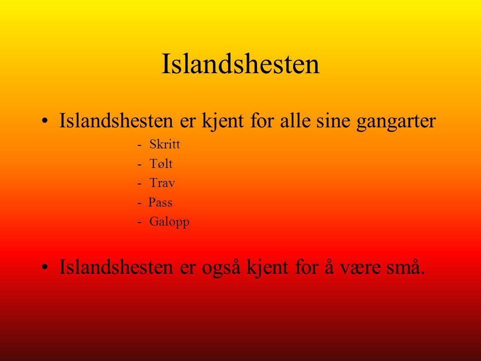 Islandshesten Islandshesten er kjent for alle sine gangarter