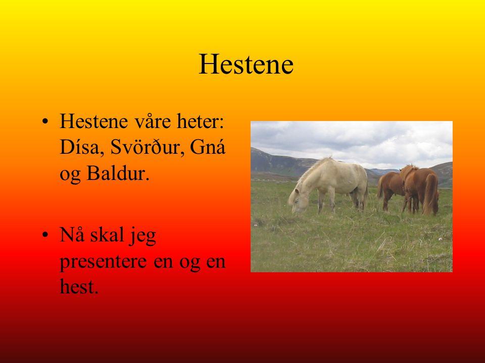 Hestene Hestene våre heter: Dísa, Svörður, Gná og Baldur.