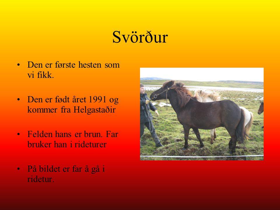 Svörður Den er første hesten som vi fikk.