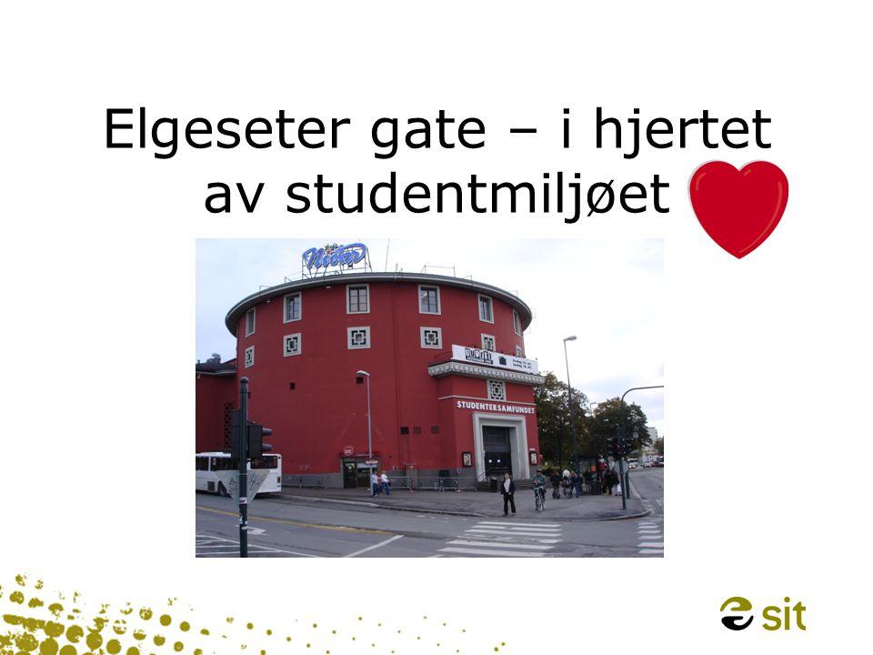 Elgeseter gate – i hjertet av studentmiljøet