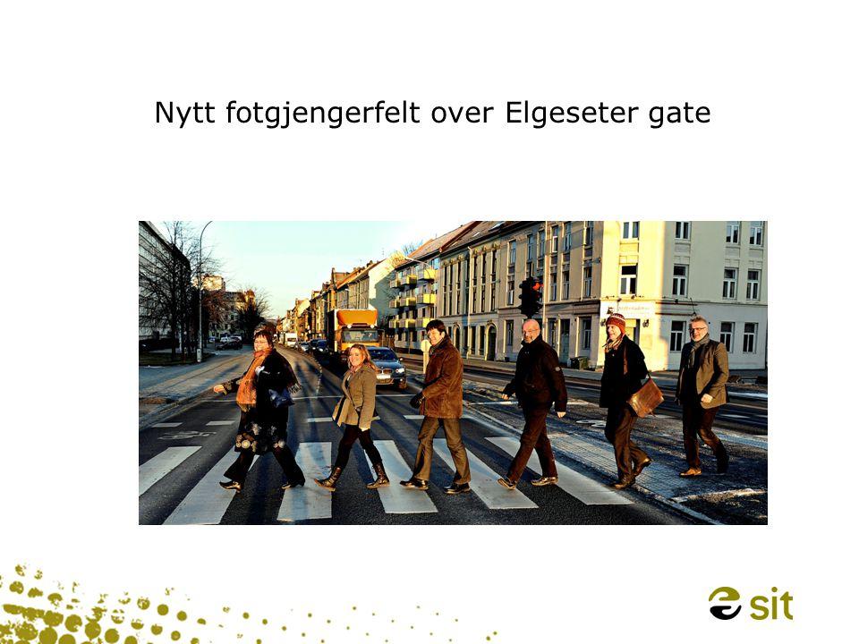Nytt fotgjengerfelt over Elgeseter gate