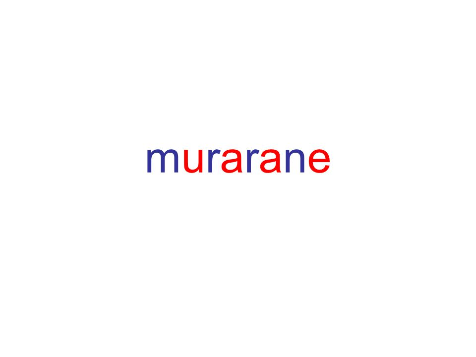 murarane