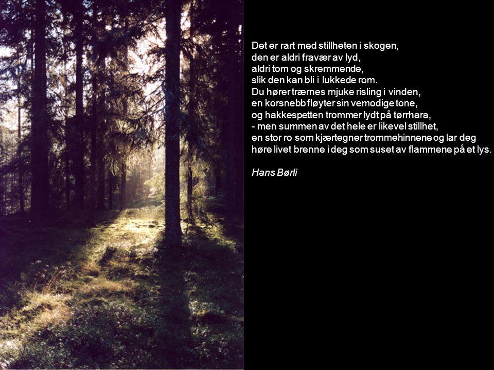 Det er rart med stillheten i skogen,