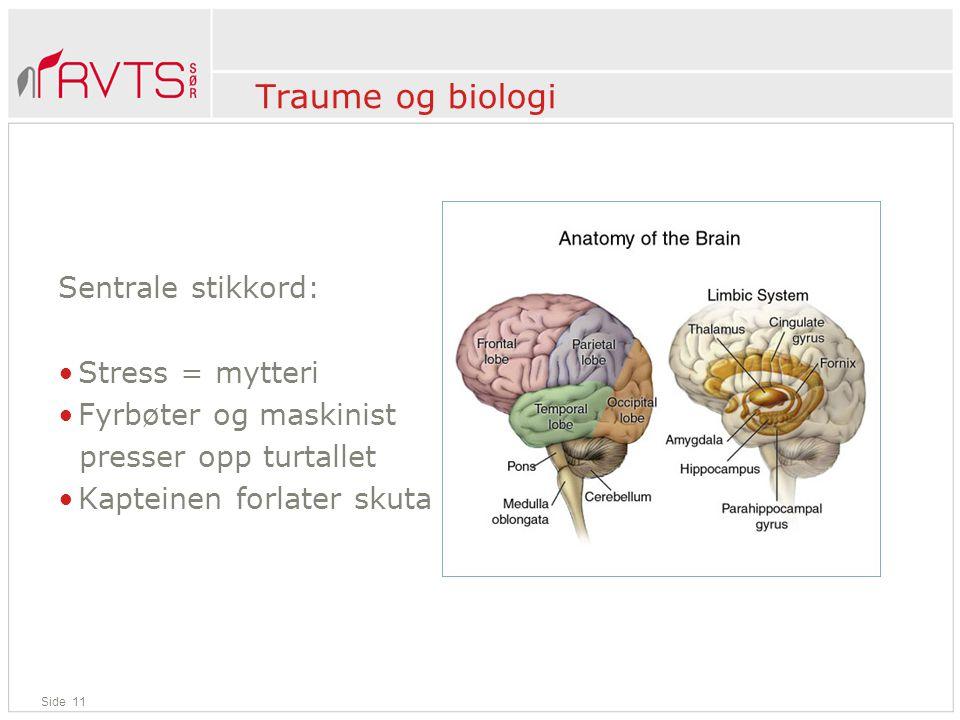 Traume og biologi Sentrale stikkord: Stress = mytteri