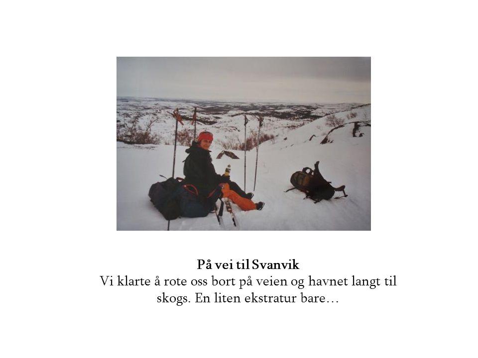 På vei til Svanvik Vi klarte å rote oss bort på veien og havnet langt til skogs.