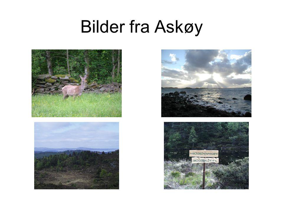 Bilder fra Askøy