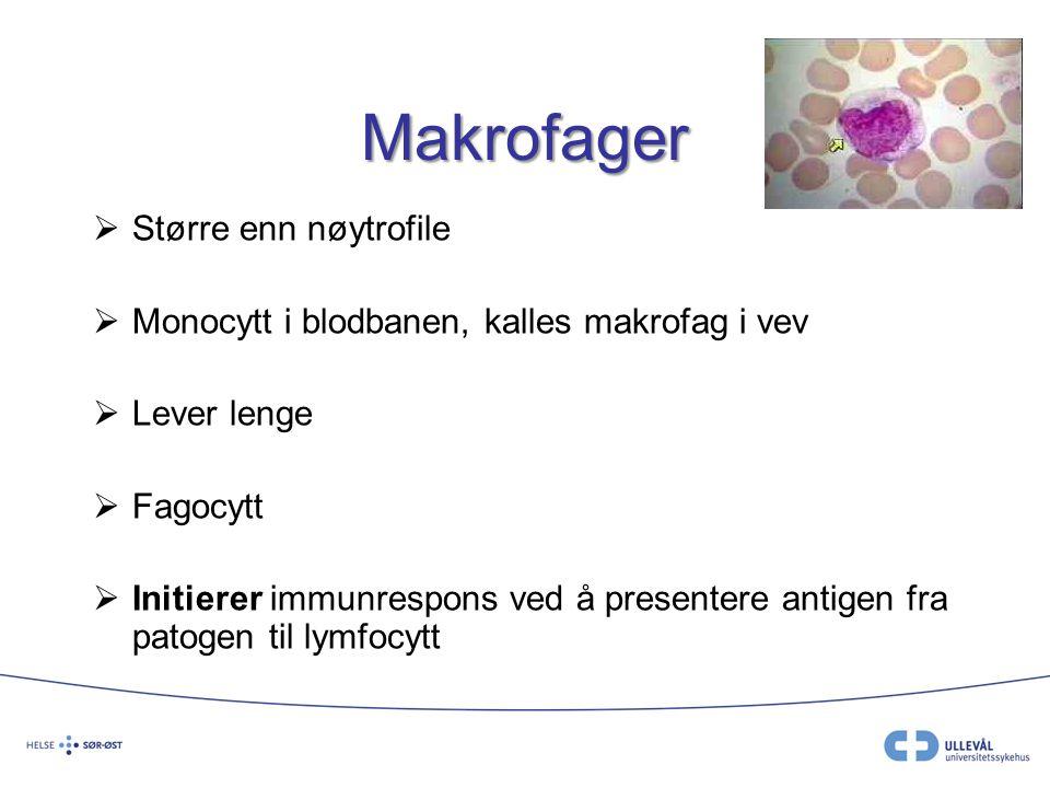 Makrofager Større enn nøytrofile