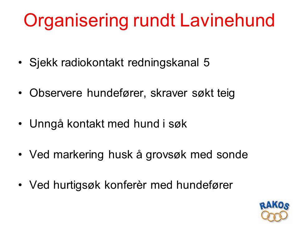 Organisering rundt Lavinehund