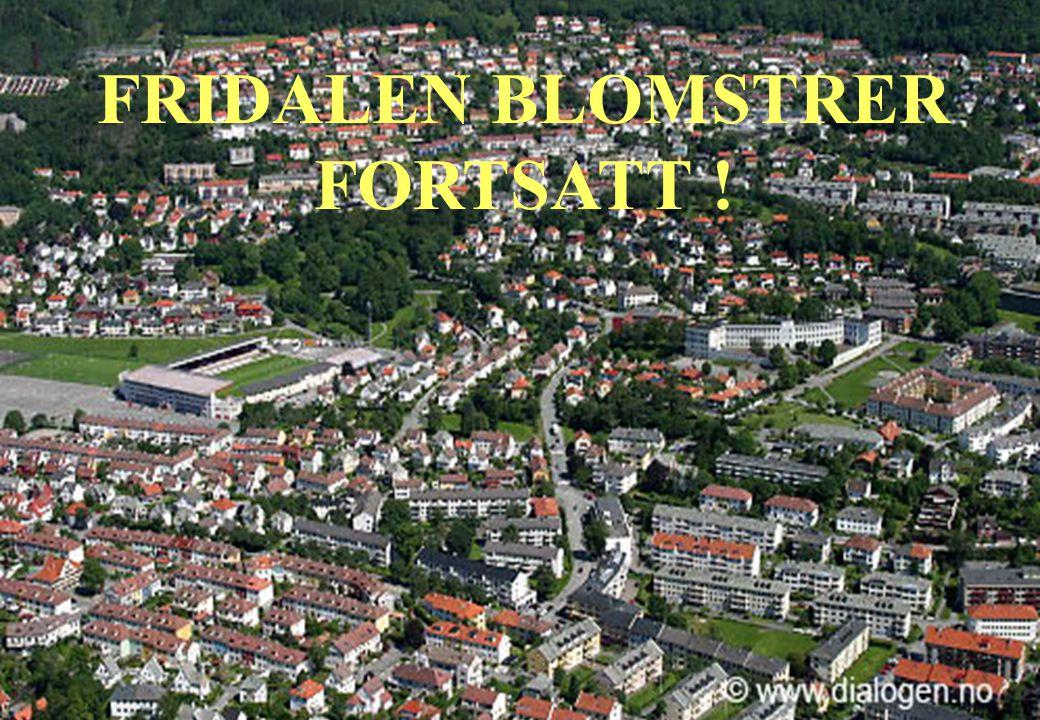 FRIDALEN BLOMSTRER FORTSATT !