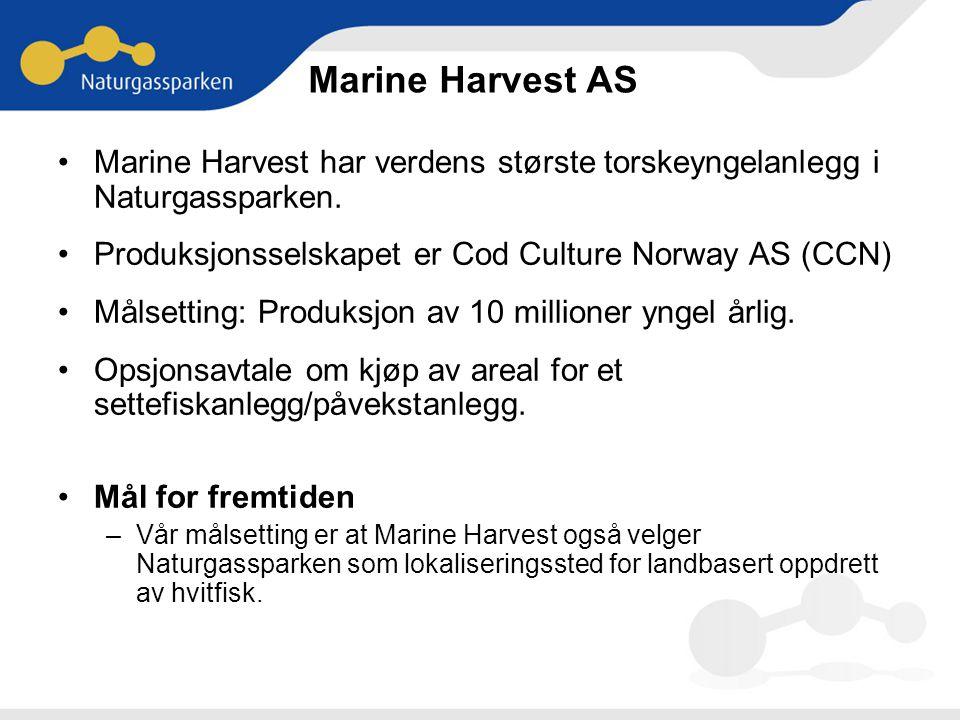 Marine Harvest AS Marine Harvest har verdens største torskeyngelanlegg i Naturgassparken. Produksjonsselskapet er Cod Culture Norway AS (CCN)