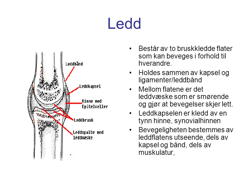 Ledd Består av to bruskkledde flater som kan beveges i forhold til hverandre. Holdes sammen av kapsel og ligamenter/leddbånd.