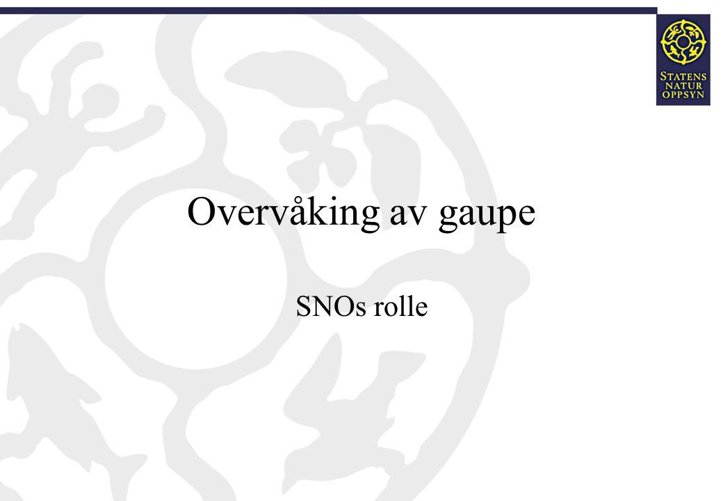 Overvåking av gaupe SNOs rolle