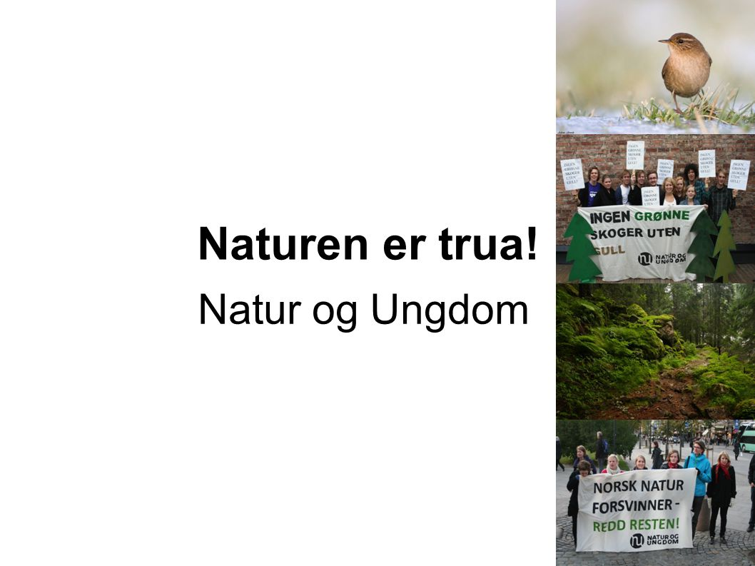 Naturen er trua! Natur og Ungdom