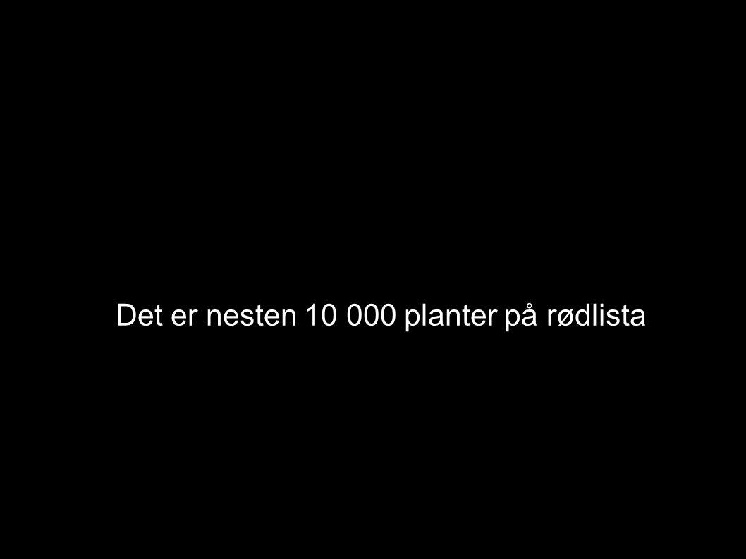 Det er nesten 10 000 planter på rødlista