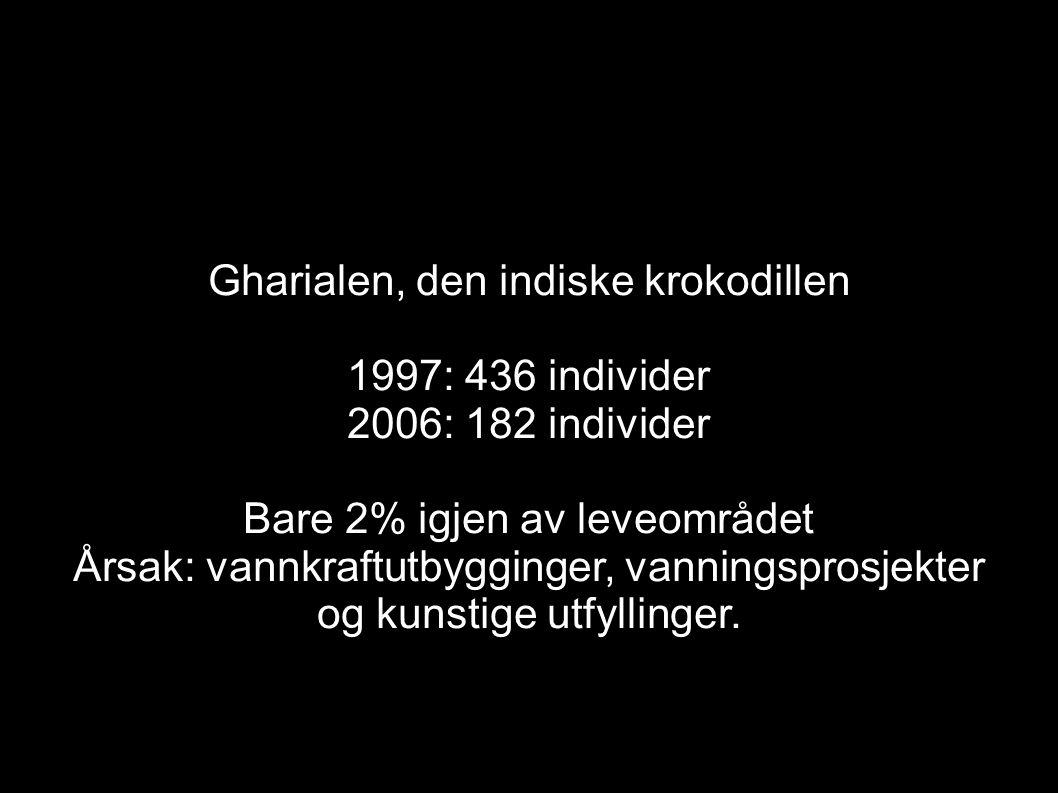 Gharialen, den indiske krokodillen 1997: 436 individer
