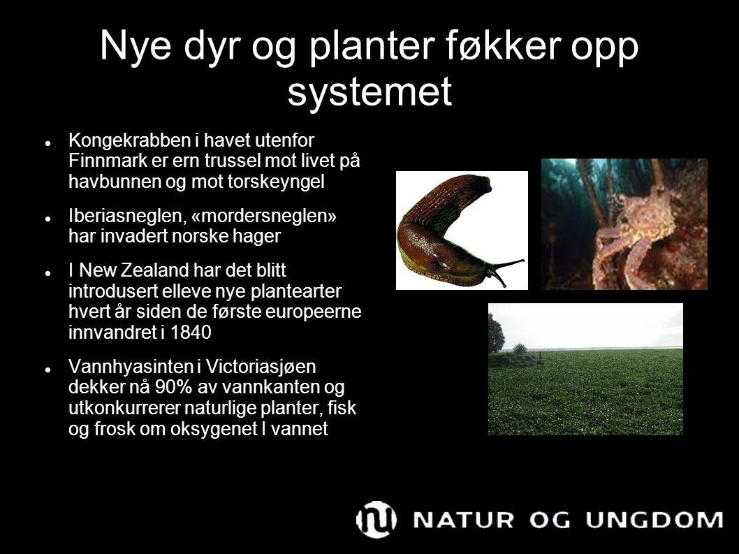Nye dyr og planter føkker opp systemet