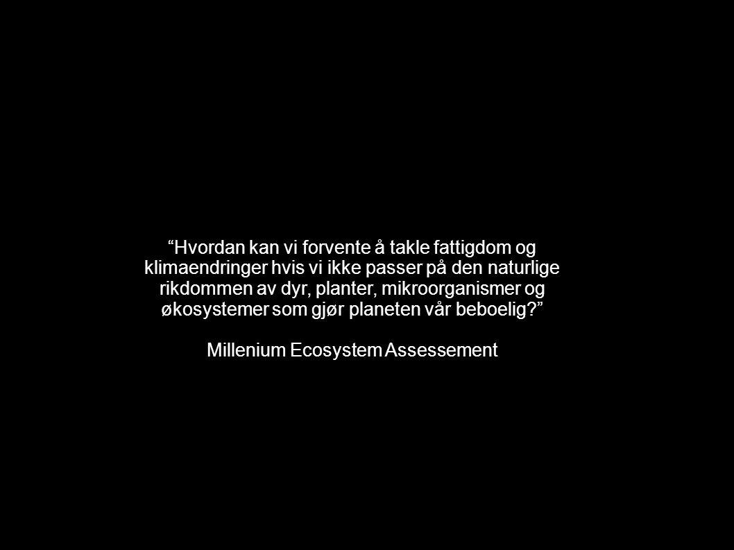 Millenium Ecosystem Assessement