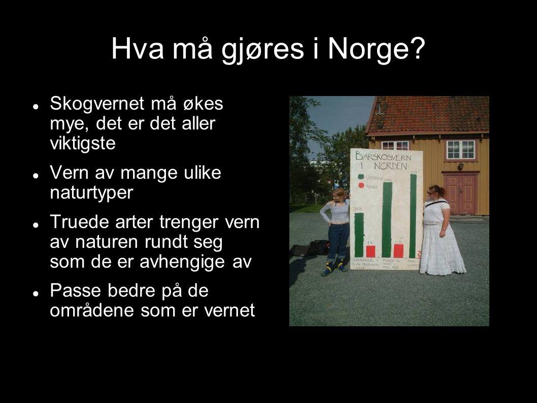 Hva må gjøres i Norge Skogvernet må økes mye, det er det aller viktigste. Vern av mange ulike naturtyper.