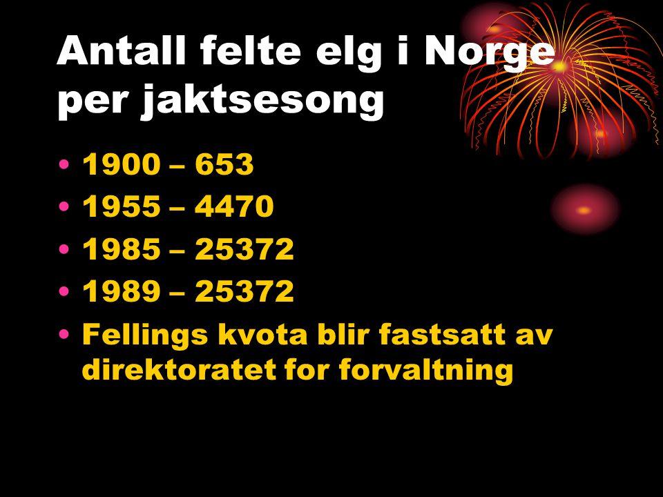 Antall felte elg i Norge per jaktsesong