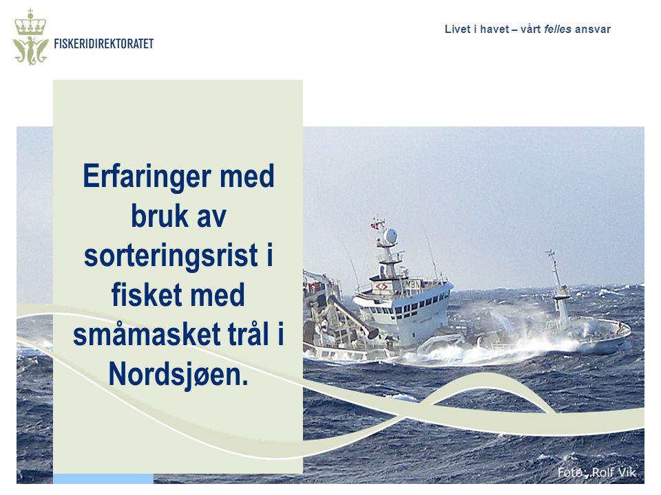 Erfaringer med bruk av sorteringsrist i fisket med småmasket trål i Nordsjøen.
