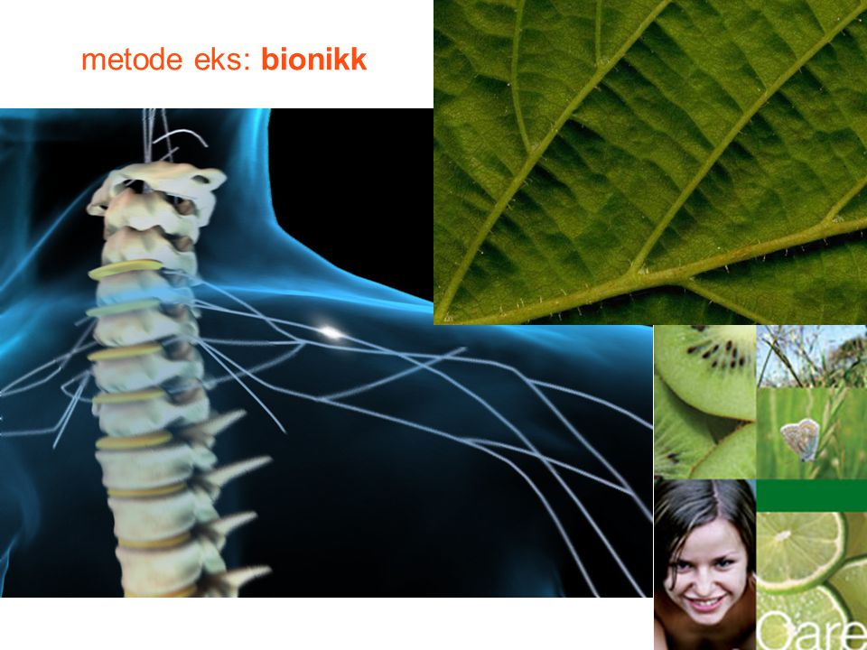 metode eks: bionikk 15.05