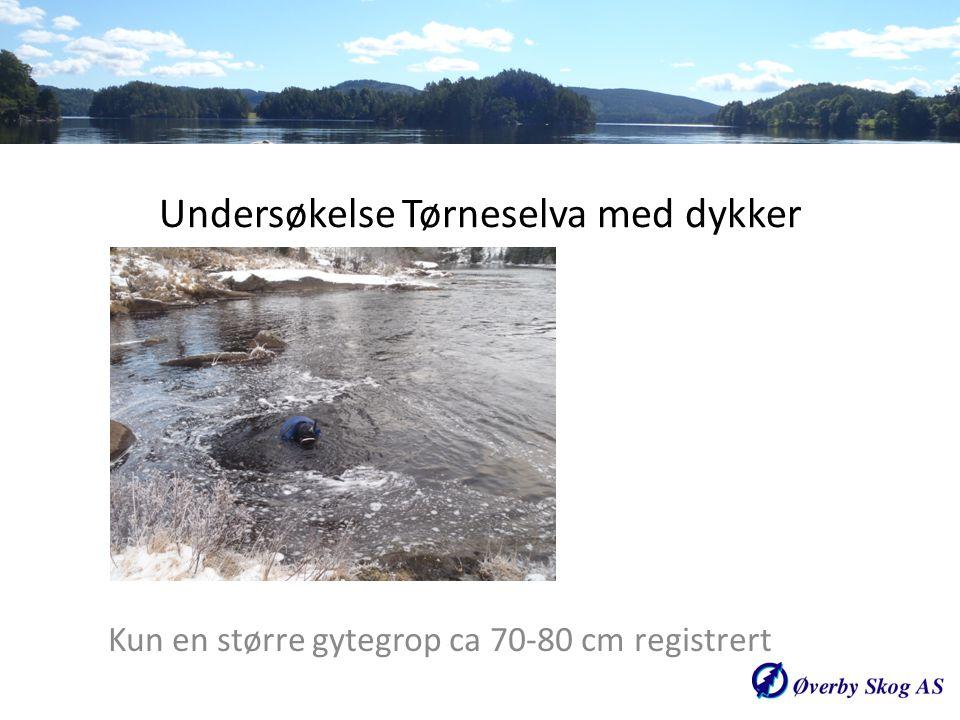 Undersøkelse Tørneselva med dykker