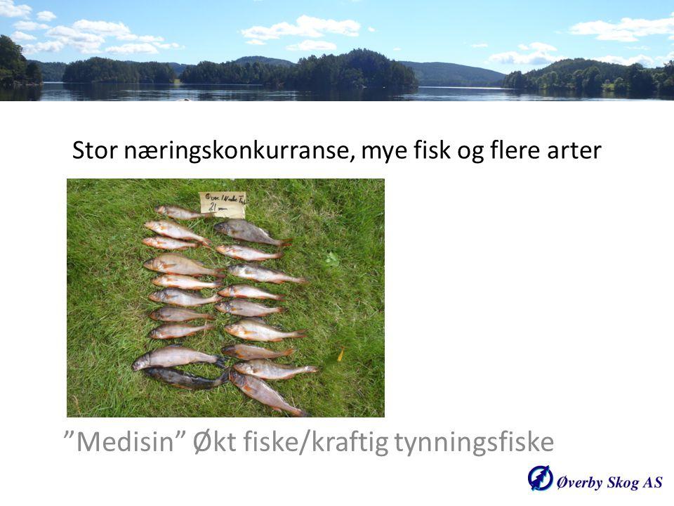 Stor næringskonkurranse, mye fisk og flere arter