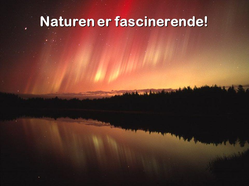 Naturen er fascinerende!