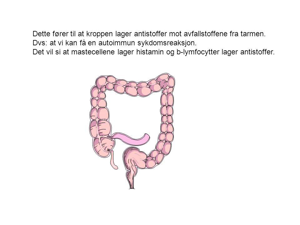 Dette fører til at kroppen lager antistoffer mot avfallstoffene fra tarmen.