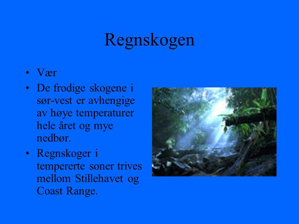 Regnskogen Vær. De frodige skogene i sør-vest er avhengige av høye temperaturer hele året og mye nedbør.