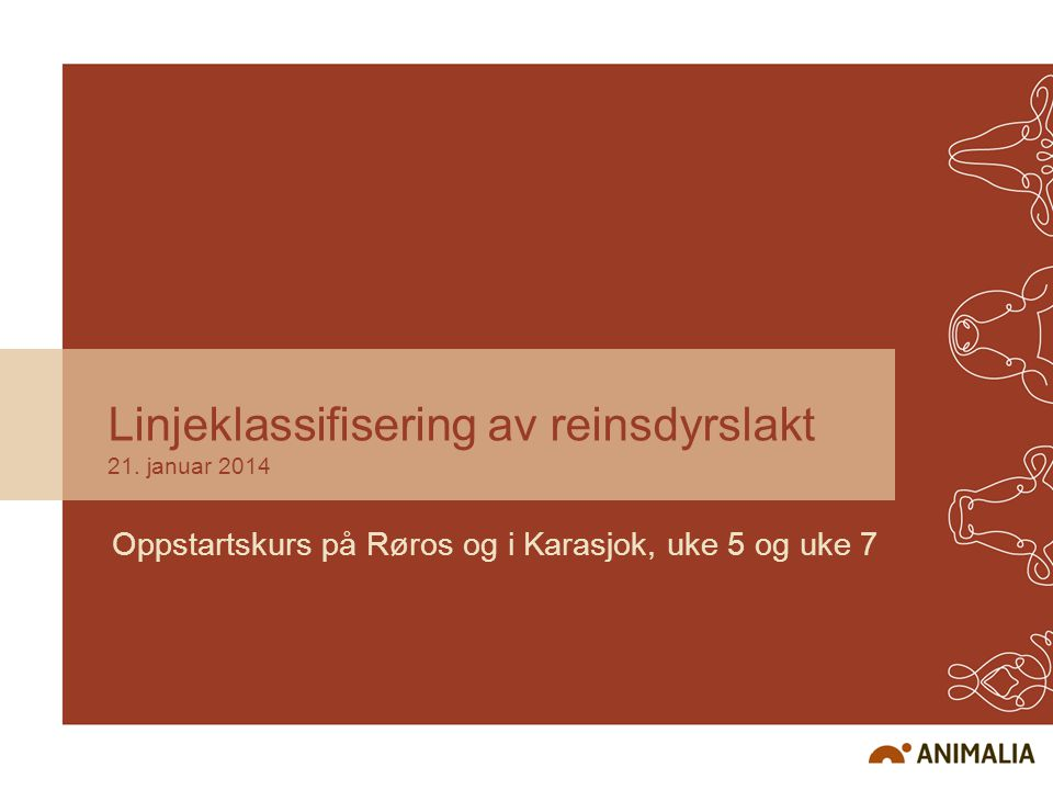 Linjeklassifisering av reinsdyrslakt 21. januar 2014