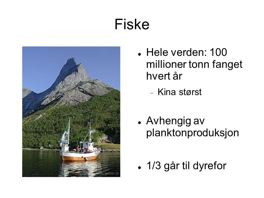 Fiske Hele verden: 100 millioner tonn fanget hvert år