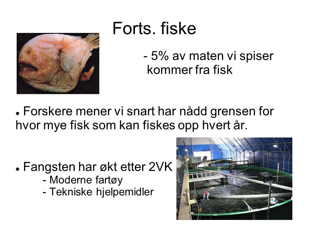 Forts. fiske - 5% av maten vi spiser kommer fra fisk