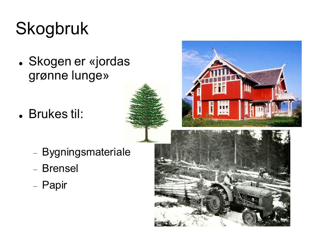 Skogbruk Skogen er «jordas grønne lunge» Brukes til: Bygningsmateriale
