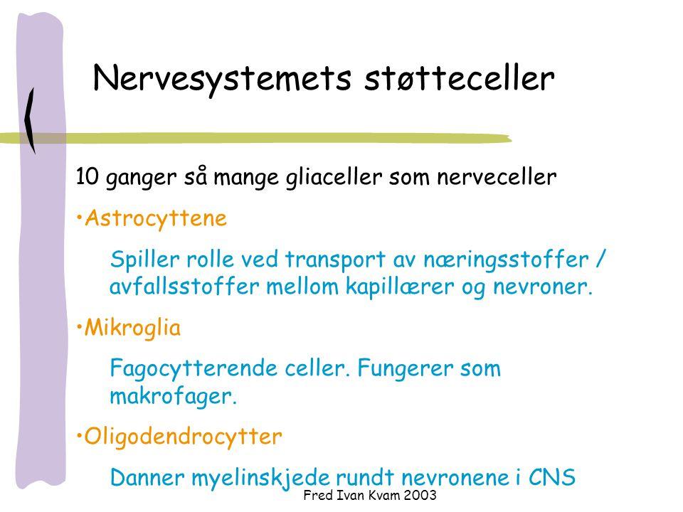 Nervesystemets støtteceller