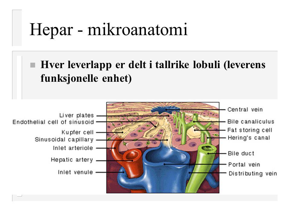 Hepar - mikroanatomi Hver leverlapp er delt i tallrike lobuli (leverens funksjonelle enhet)