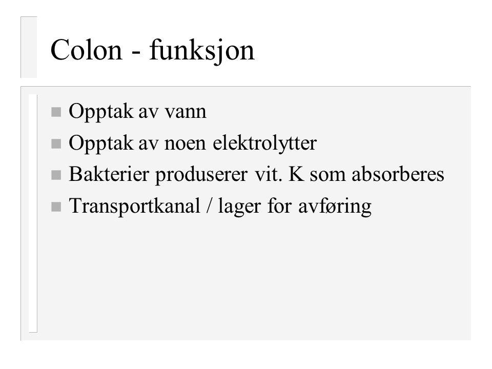 Colon - funksjon Opptak av vann Opptak av noen elektrolytter
