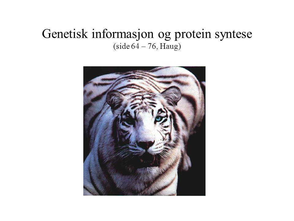 Genetisk informasjon og protein syntese (side 64 – 76, Haug)