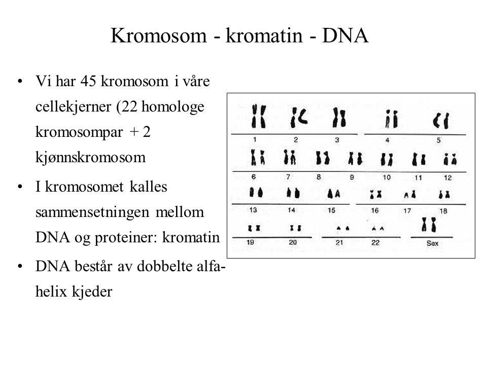 Kromosom - kromatin - DNA