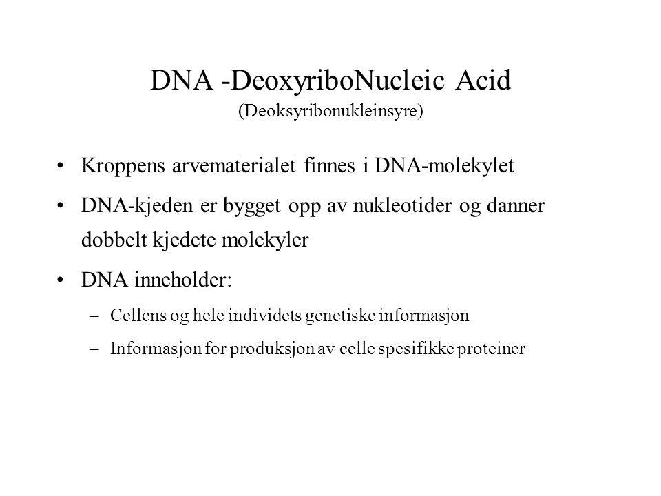 DNA -DeoxyriboNucleic Acid (Deoksyribonukleinsyre)
