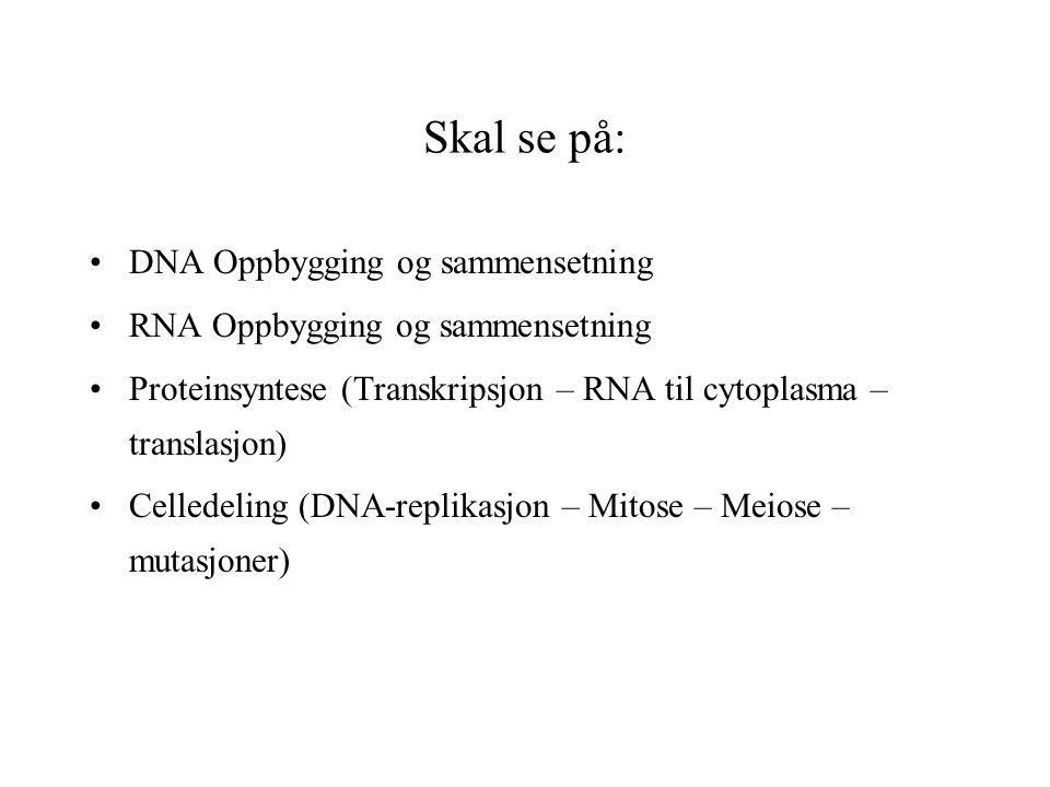 Skal se på: DNA Oppbygging og sammensetning